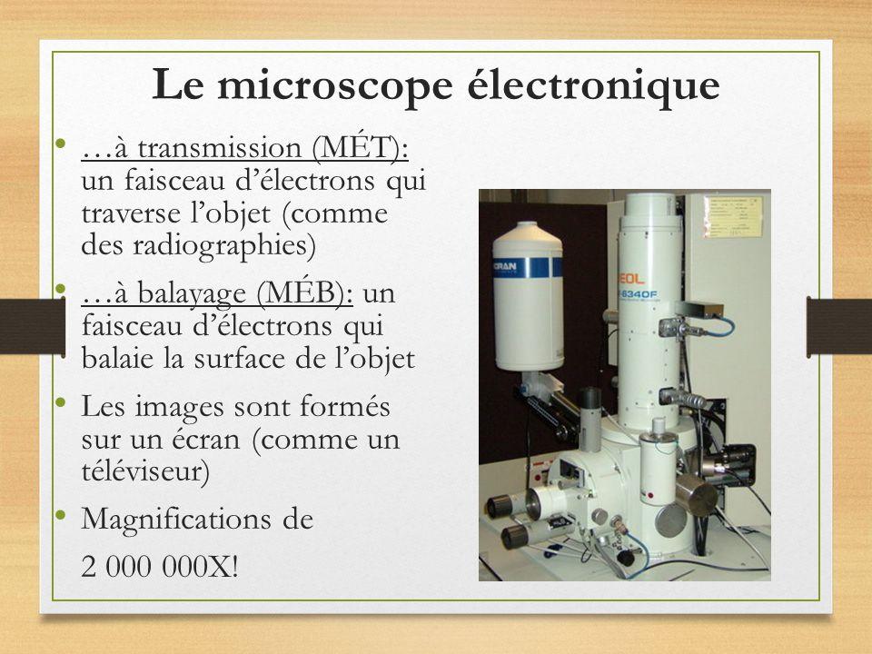 le microscope un instrument qui grossit de nombreuses fois l image des objets trop petits pour. Black Bedroom Furniture Sets. Home Design Ideas