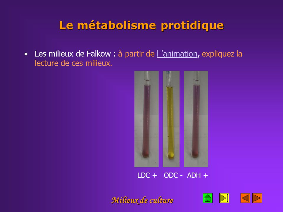 Le métabolisme protidique