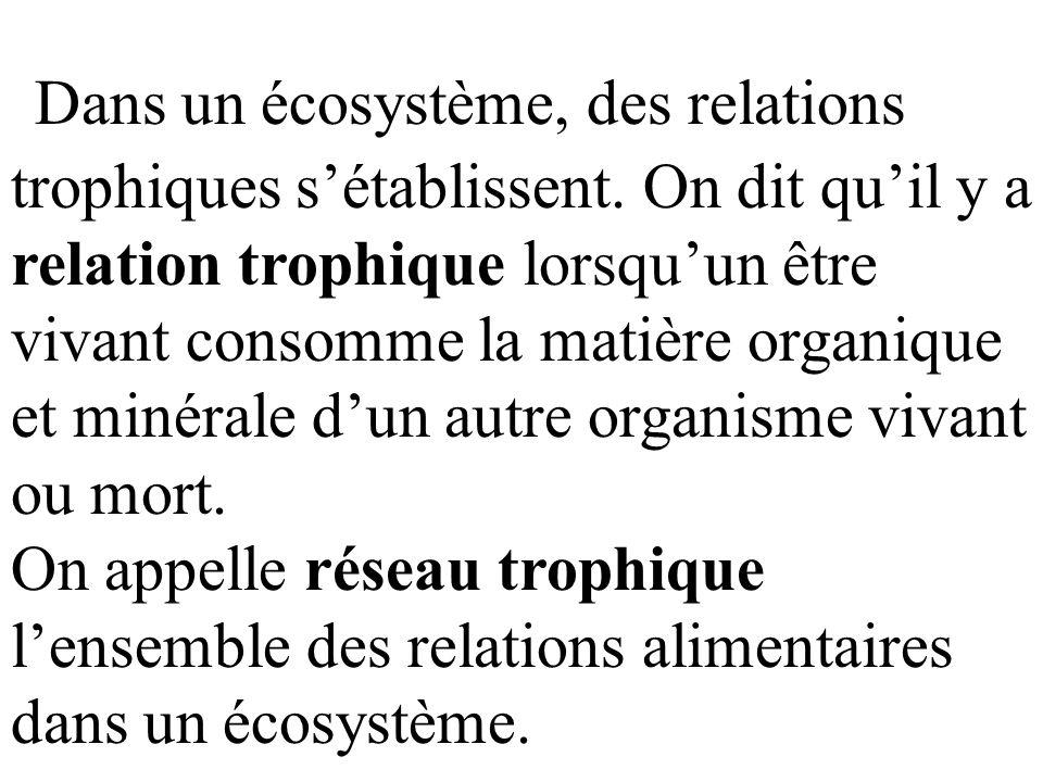 Dans un écosystème, des relations trophiques s'établissent