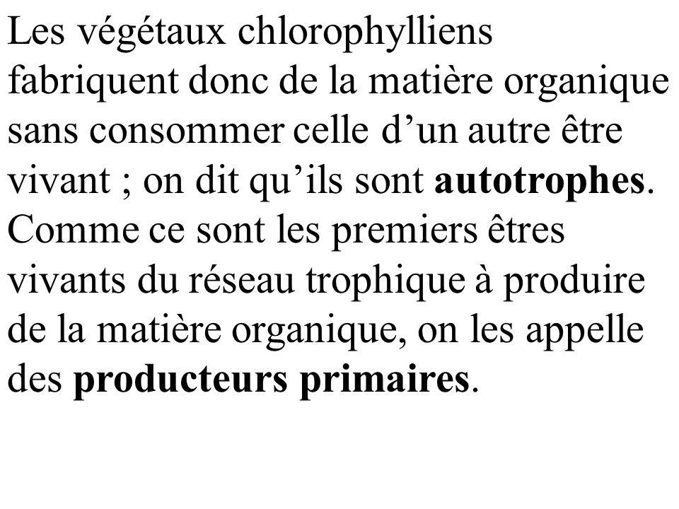 Les végétaux chlorophylliens fabriquent donc de la matière organique sans consommer celle d'un autre être vivant ; on dit qu'ils sont autotrophes. Comme ce sont les premiers êtres vivants du réseau trophique à produire