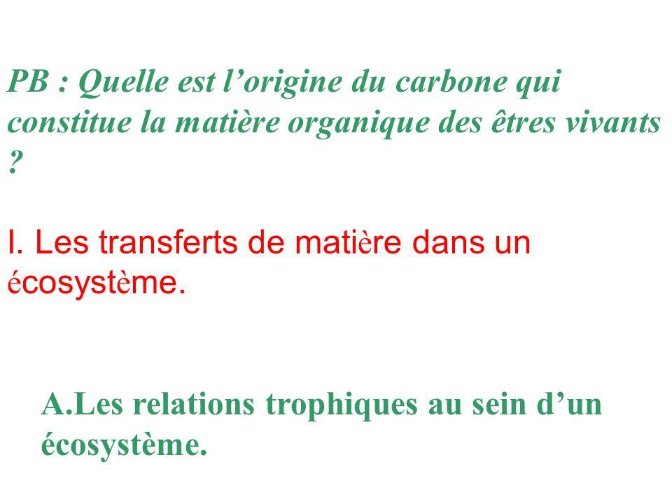 PB : Quelle est l'origine du carbone qui constitue la matière organique des êtres vivants