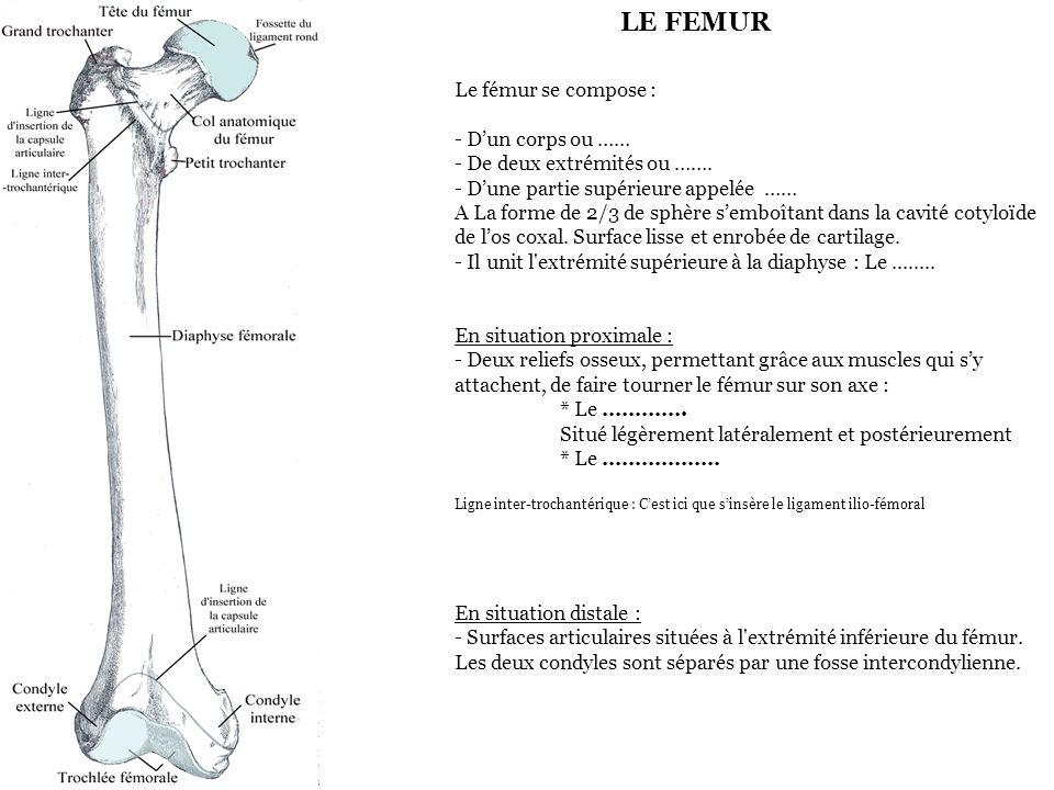 LE FEMUR Le fémur se compose : - D'un corps ou …… - De deux extrémités ou …….