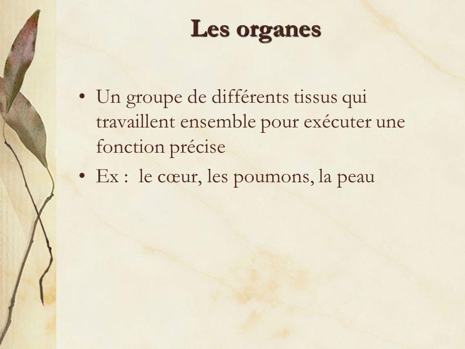 Les organes Un groupe de différents tissus qui travaillent ensemble pour exécuter une fonction précise.