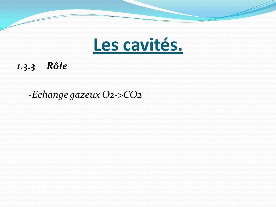 Les cavités. 1.3.3 Rôle -Echange gazeux O2->CO2