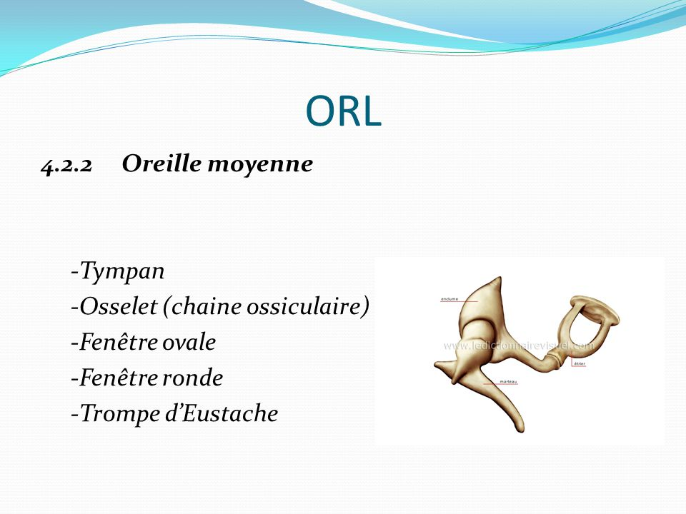 ORL 4.2.2 Oreille moyenne -Tympan -Osselet (chaine ossiculaire) -Fenêtre ovale -Fenêtre ronde -Trompe d'Eustache