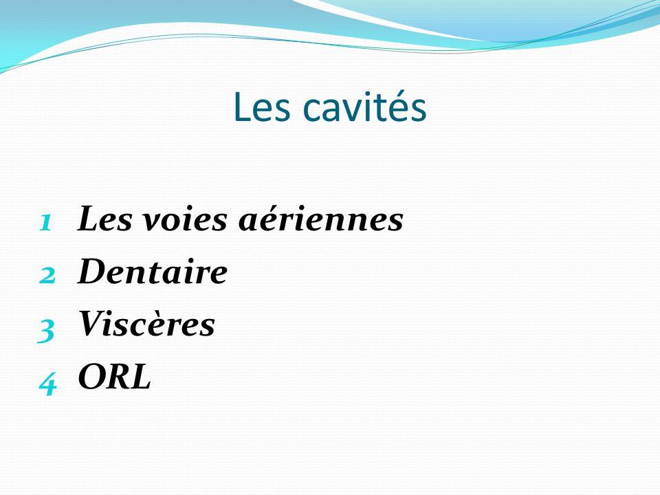 Les cavités Les voies aériennes Dentaire Viscères ORL