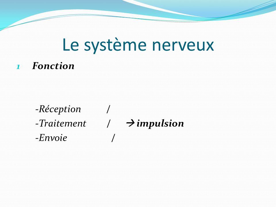 Le système nerveux Fonction -Réception / -Traitement /  impulsion
