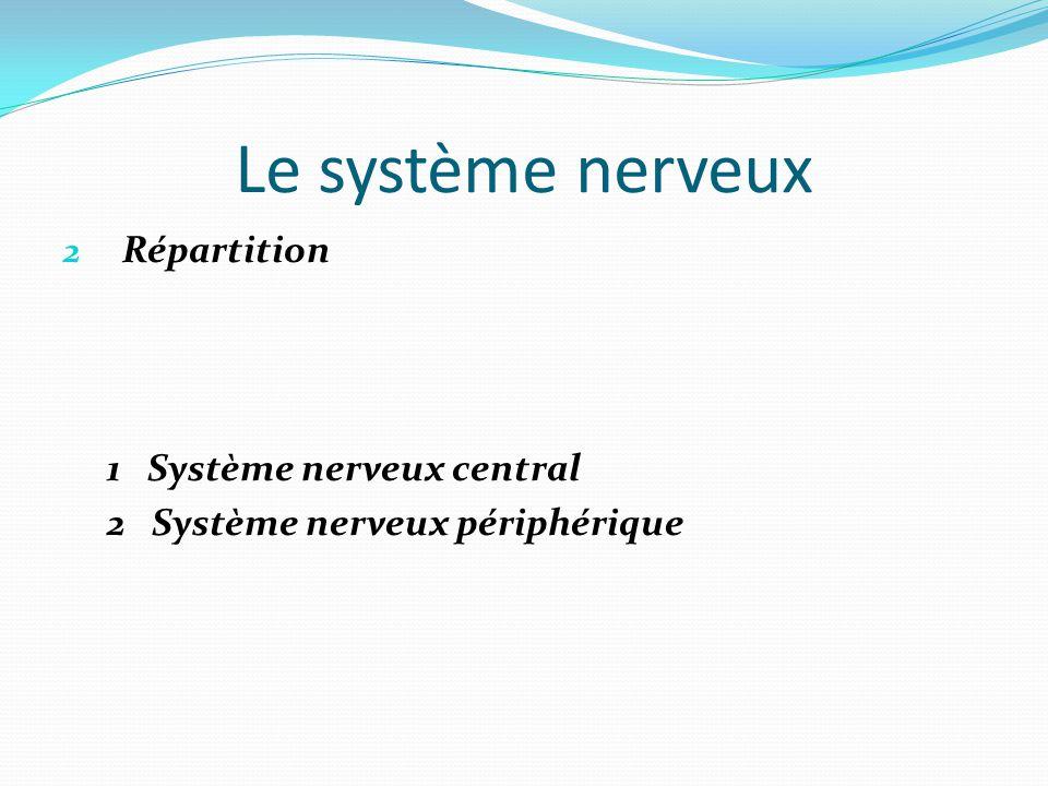 Le système nerveux Répartition 1 Système nerveux central