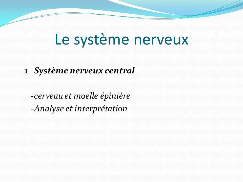 Le système nerveux 1 Système nerveux central -cerveau et moelle épinière -Analyse et interprétation