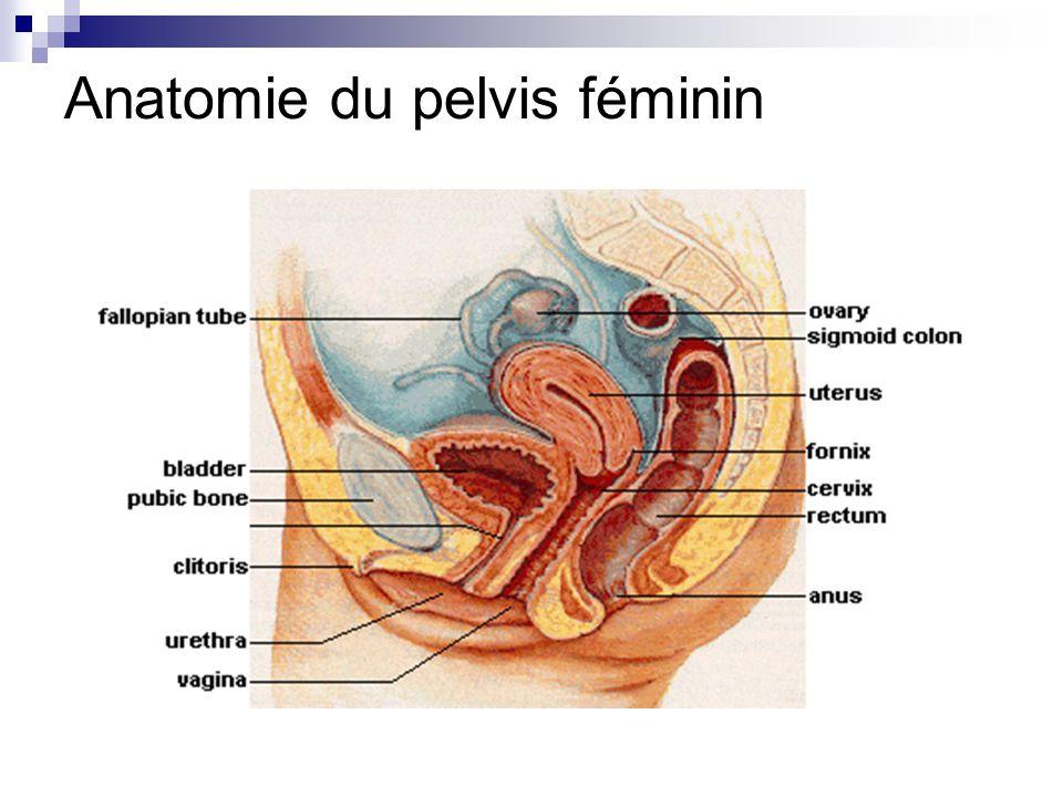Großartig Anatomie Der Hysterektomie Fotos - Anatomie Von ...