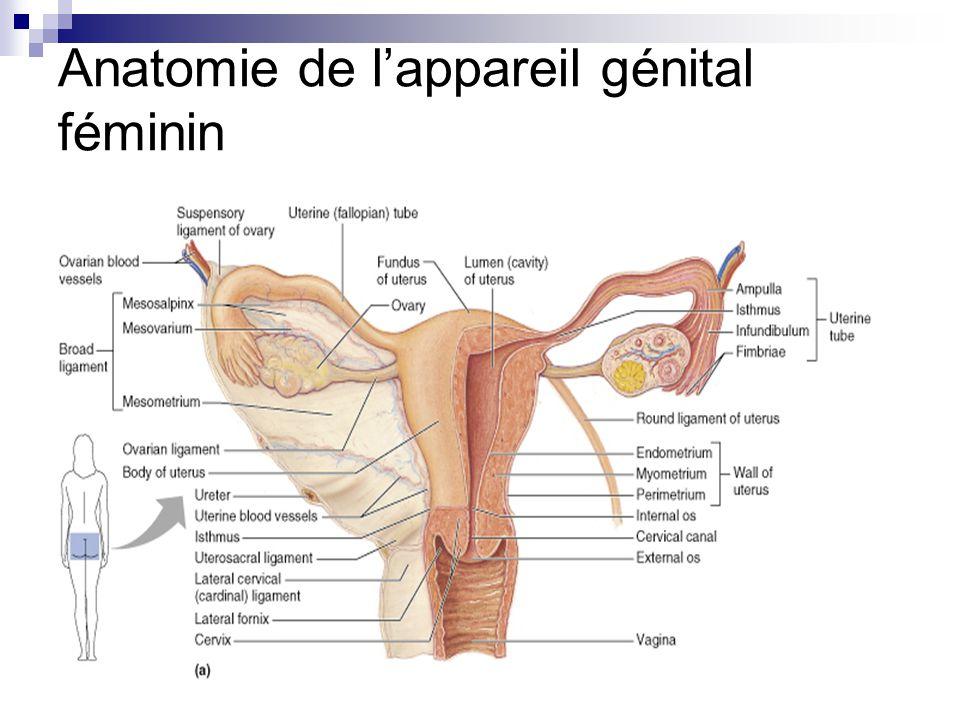 Berühmt Ligamentum Deltoideum Anatomie Zeitgenössisch - Menschliche ...