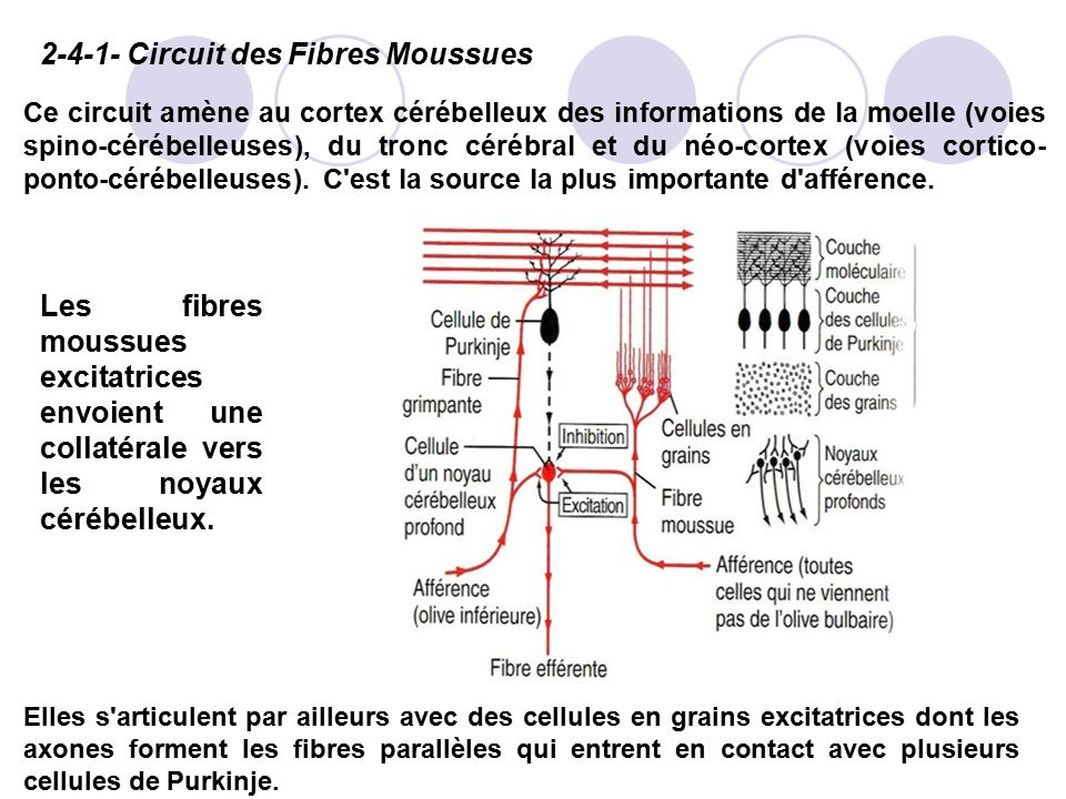Circuit des Fibres Moussues