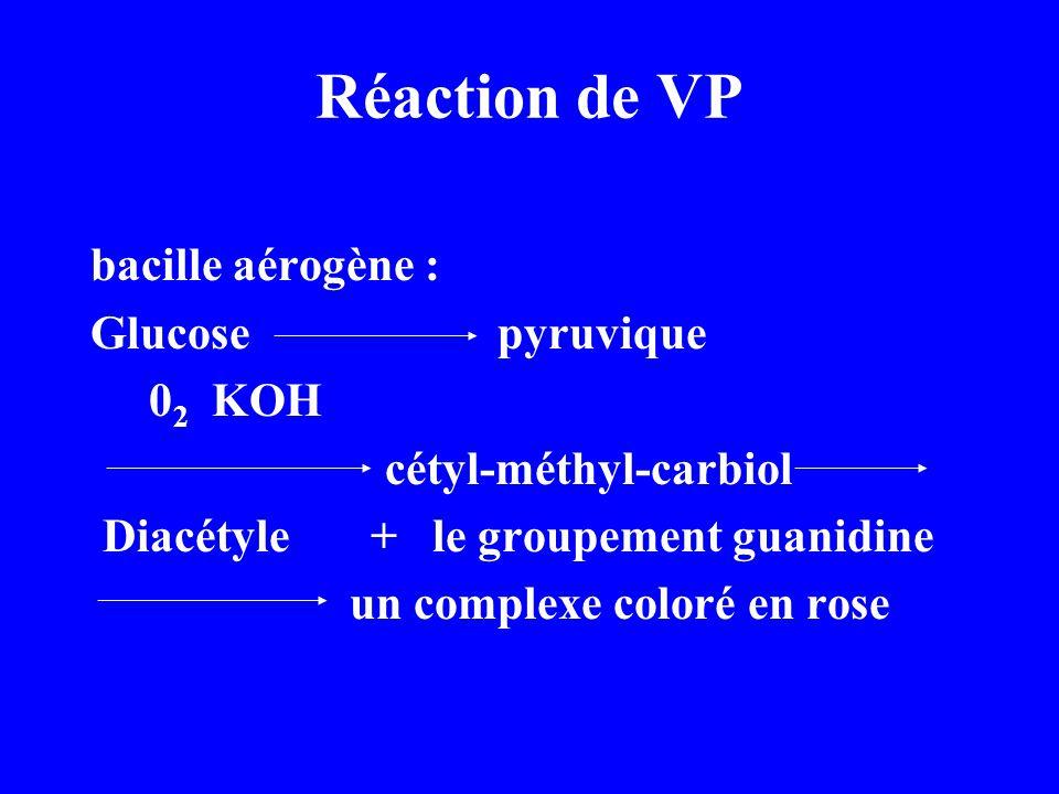 Réaction de VP bacille aérogène : Glucose pyruvique 02 KOH