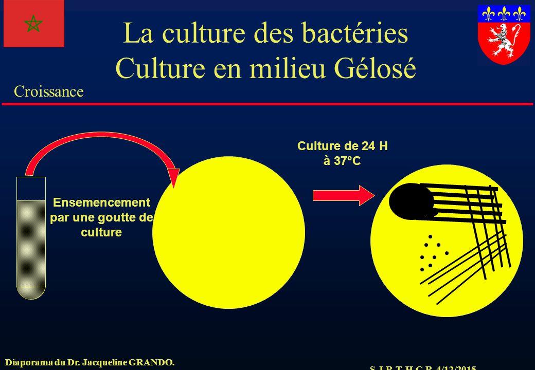 La culture des bactéries Culture en milieu Gélosé