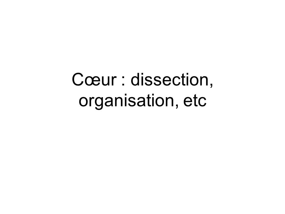 Cœur : dissection, organisation, etc