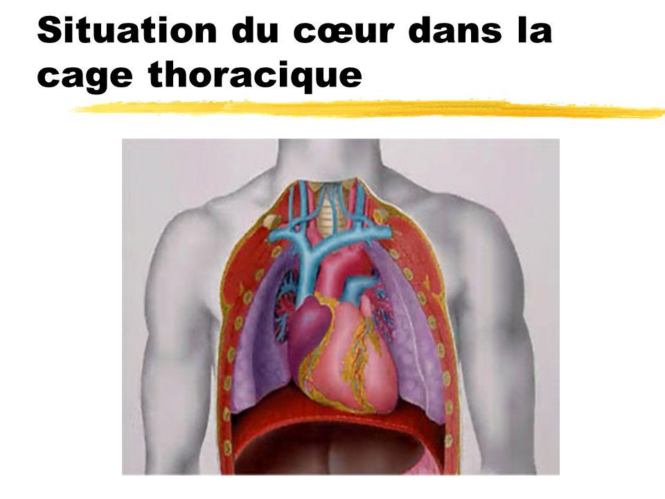 Situation du cœur dans la cage thoracique
