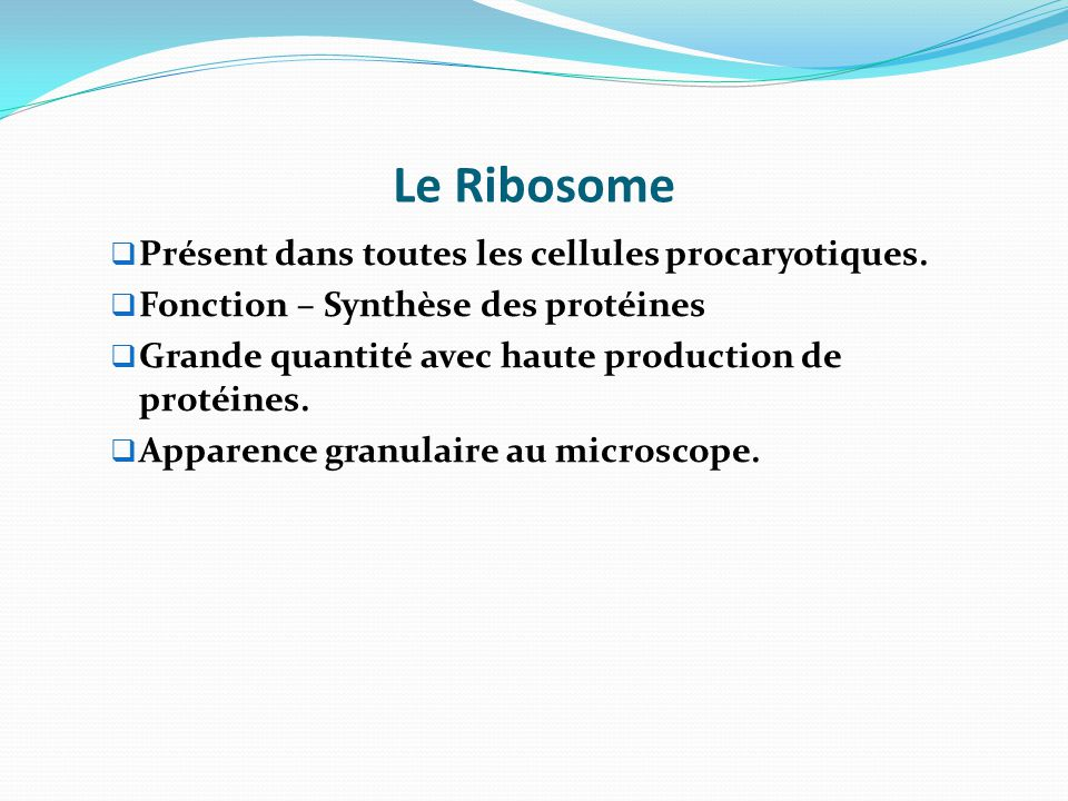 Le Ribosome Présent dans toutes les cellules procaryotiques.