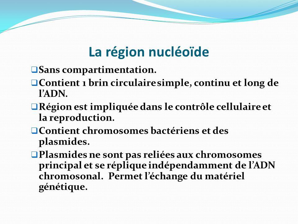 La région nucléoïde Sans compartimentation.