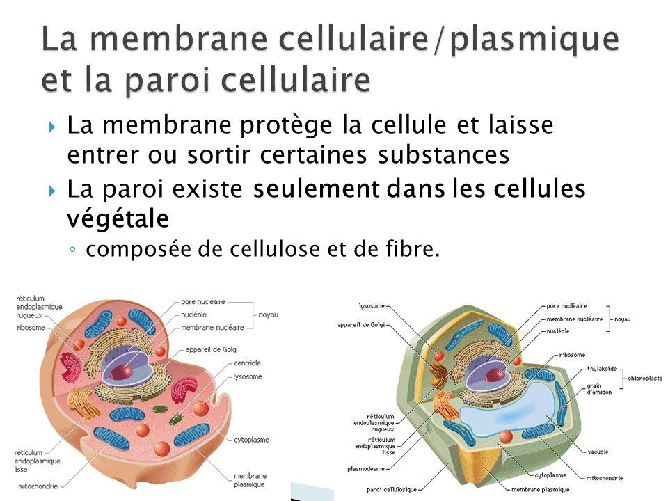 La membrane cellulaire/plasmique et la paroi cellulaire