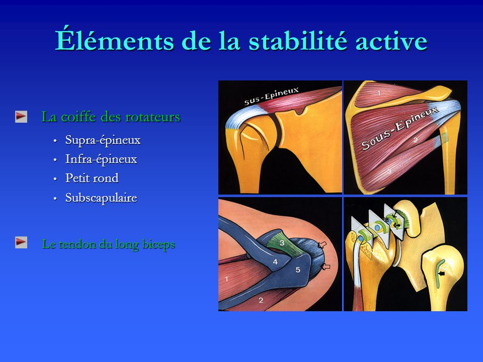 Éléments de la stabilité active