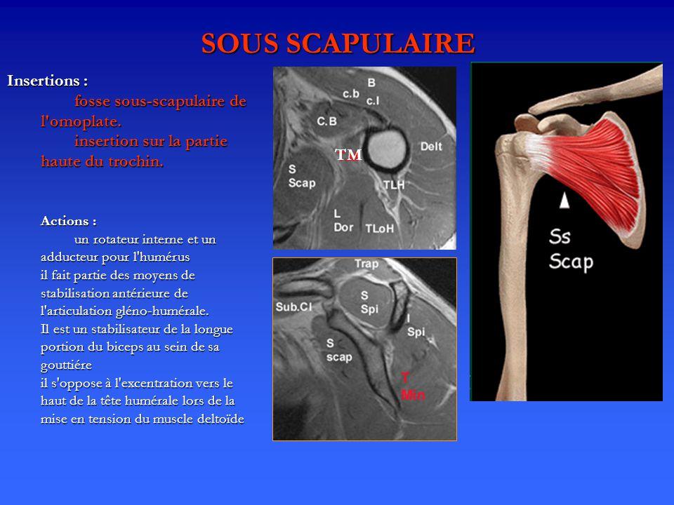 SOUS SCAPULAIRE Insertions : fosse sous-scapulaire de l omoplate.