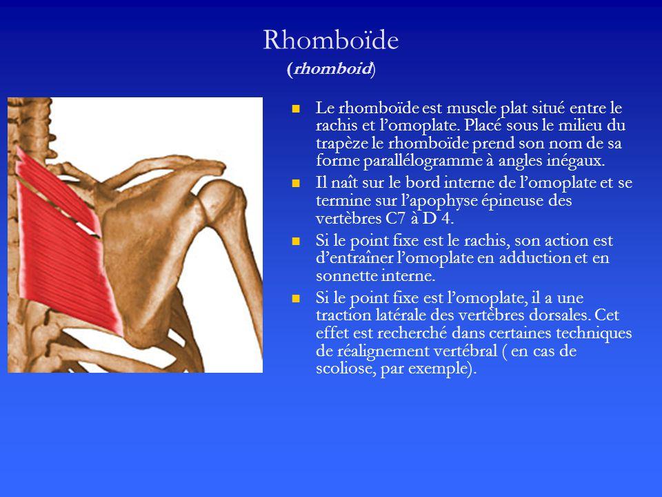 Rhomboïde (rhomboid)
