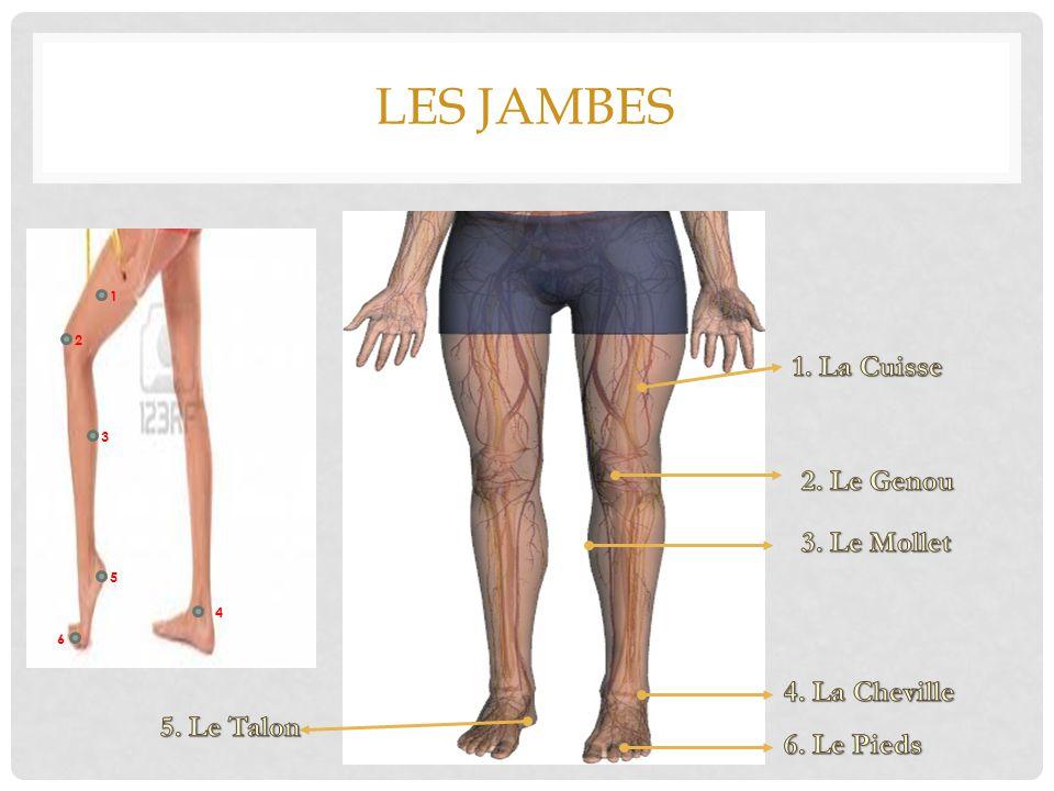 Les jambes 1. La Cuisse 2. Le Genou 3. Le Mollet 4. La Cheville