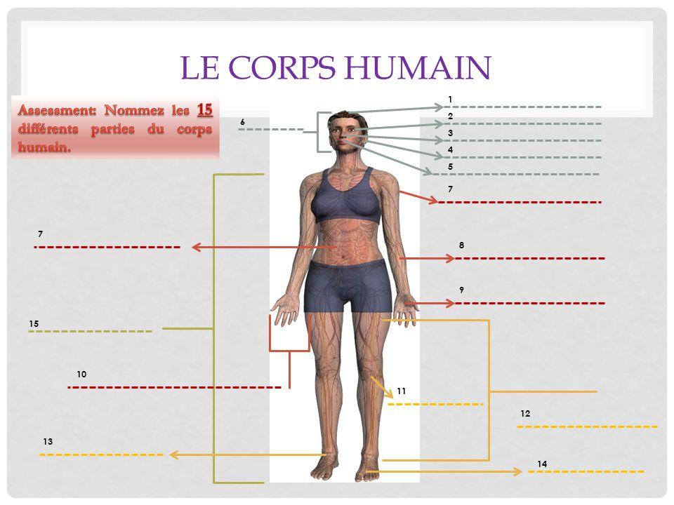 Le corps humain 1. Assessment: Nommez les 15 différents parties du corps humain. 2. 6. 3. 4. 5.