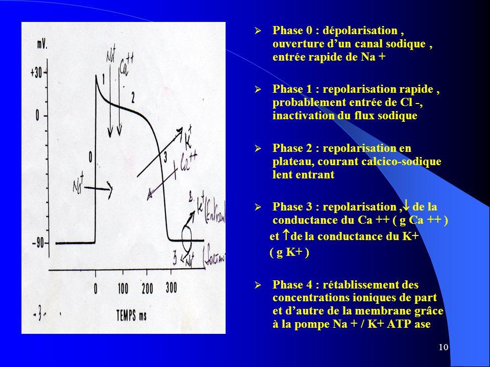 Phase 0 : dépolarisation , ouverture d'un canal sodique , entrée rapide de Na +