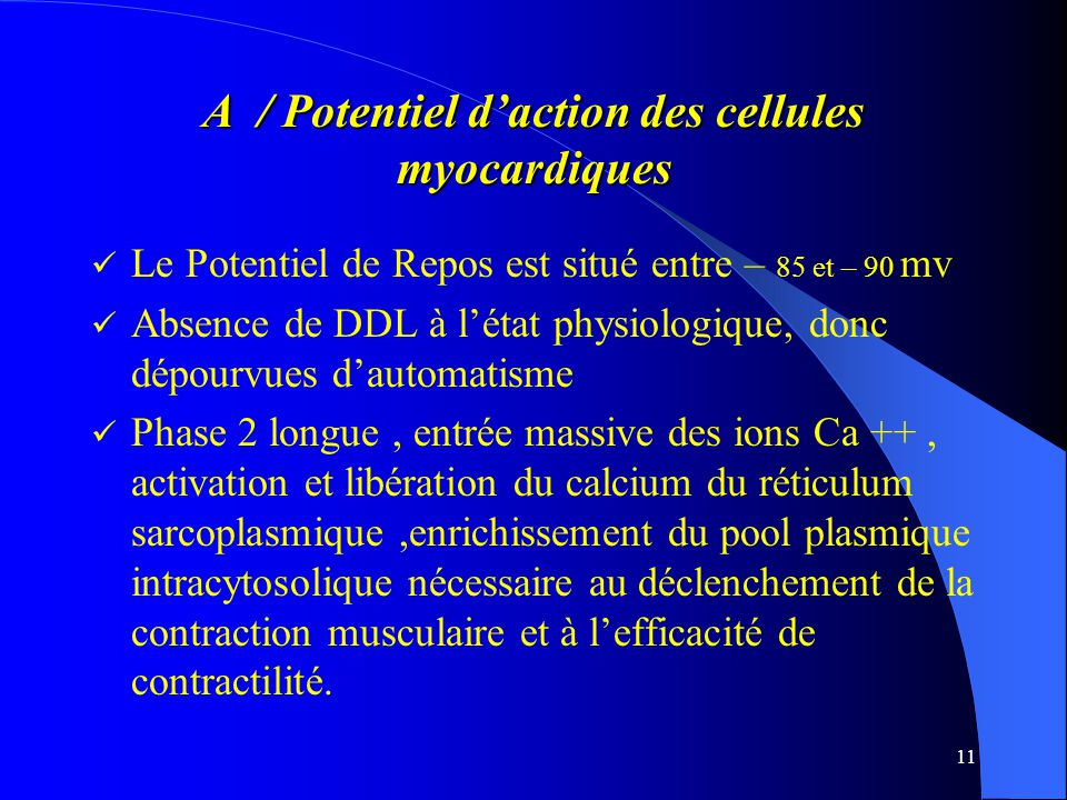 A / Potentiel d'action des cellules myocardiques