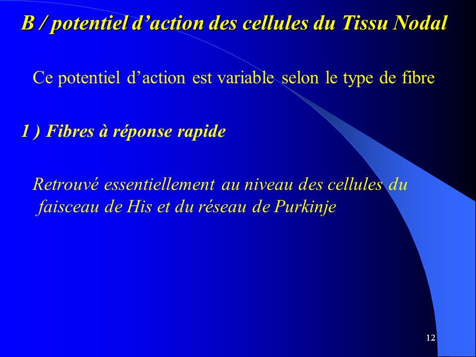 B / potentiel d'action des cellules du Tissu Nodal