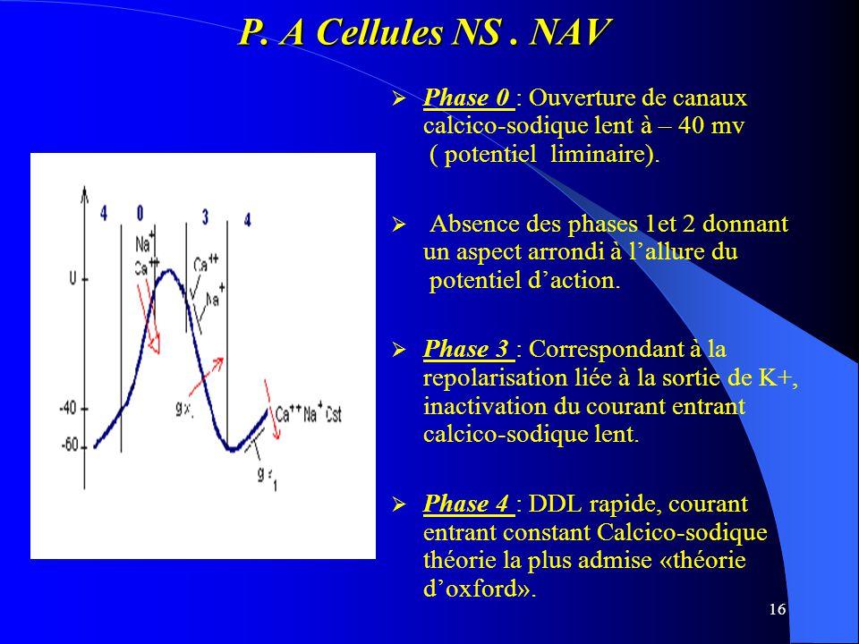 P. A Cellules NS . NAV Phase 0 : Ouverture de canaux calcico-sodique lent à – 40 mv ( potentiel liminaire).