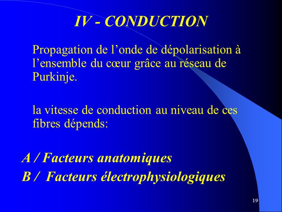 IV - CONDUCTION A / Facteurs anatomiques