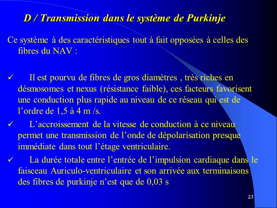 D / Transmission dans le système de Purkinje