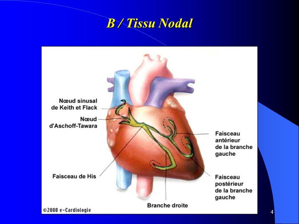 B / Tissu Nodal