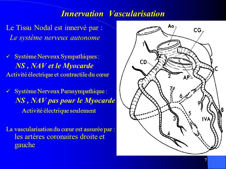 Innervation Vascularisation