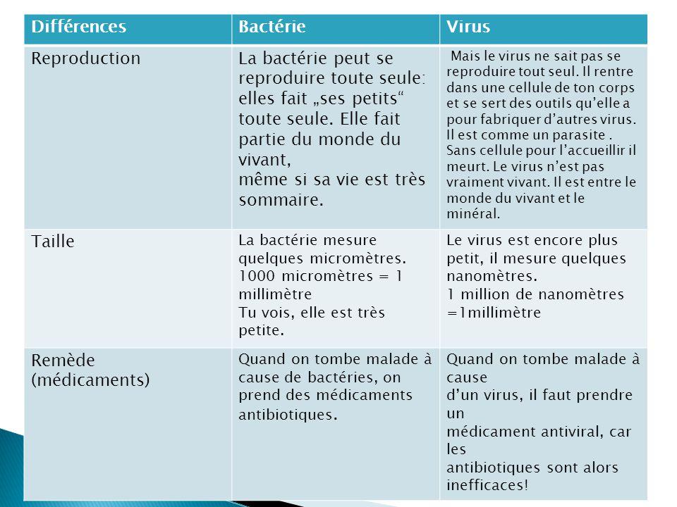 Les diff rences entre les virus et les bact ries ppt - Difference entre meuble et non meuble ...