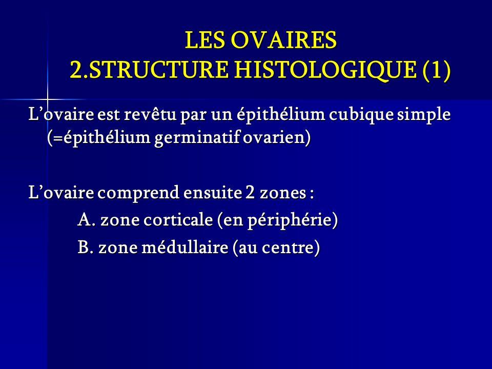 LES OVAIRES 2.STRUCTURE HISTOLOGIQUE (1)