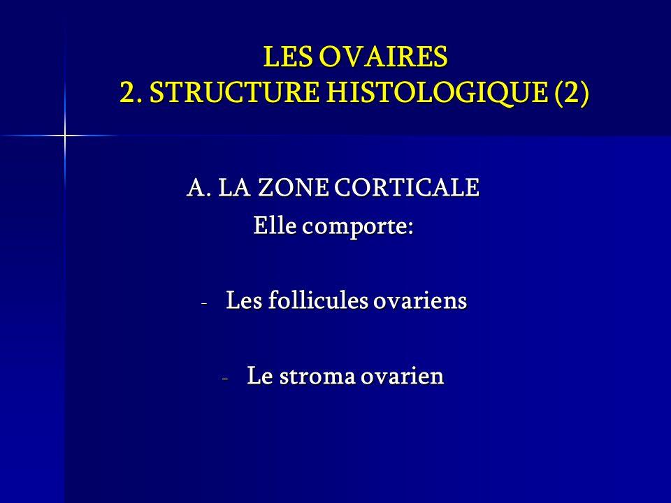 LES OVAIRES 2. STRUCTURE HISTOLOGIQUE (2)