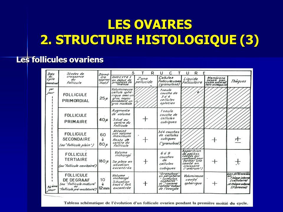 LES OVAIRES 2. STRUCTURE HISTOLOGIQUE (3)