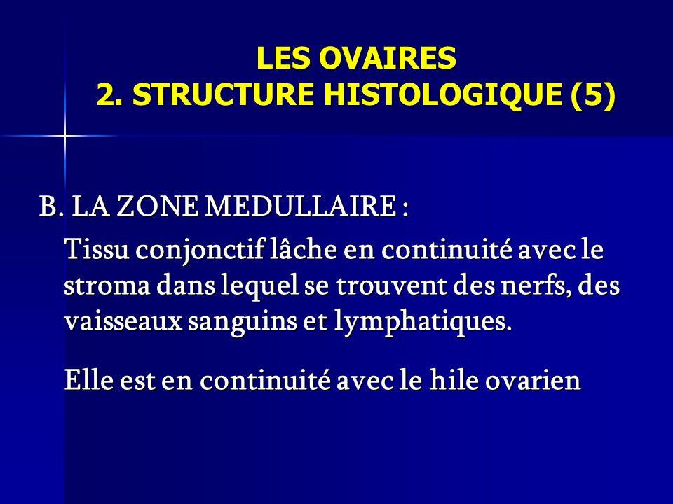 LES OVAIRES 2. STRUCTURE HISTOLOGIQUE (5)