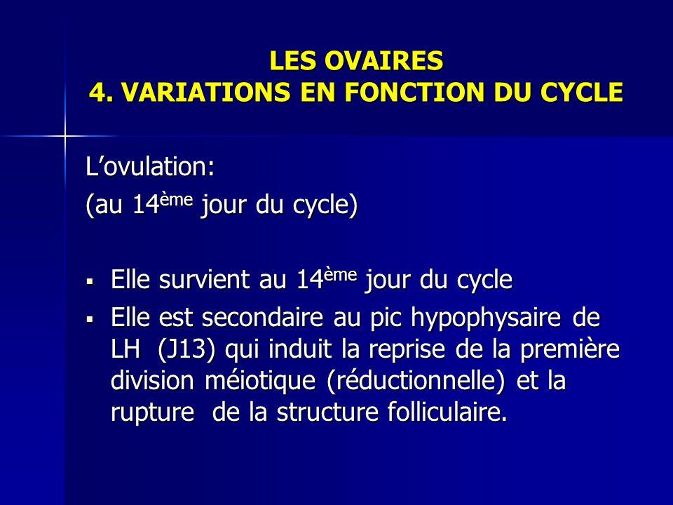 LES OVAIRES 4. VARIATIONS EN FONCTION DU CYCLE