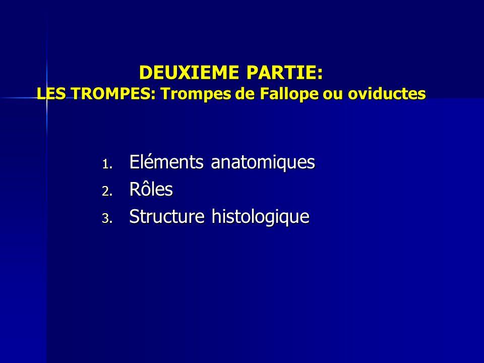 DEUXIEME PARTIE: LES TROMPES: Trompes de Fallope ou oviductes