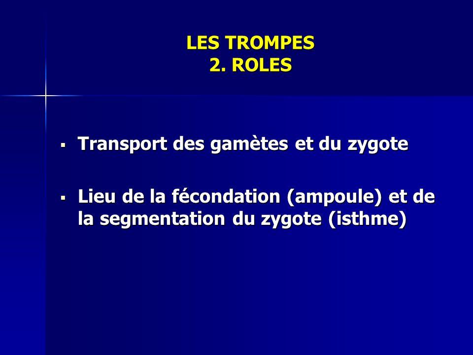 LES TROMPES 2. ROLES Transport des gamètes et du zygote.