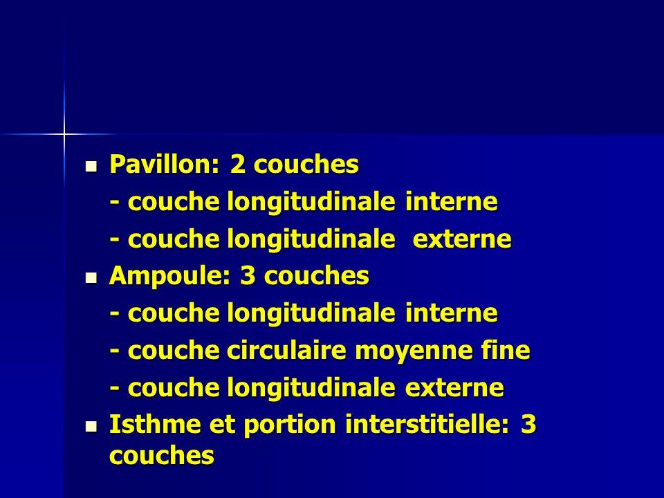 Pavillon: 2 couches - couche longitudinale interne. - couche longitudinale externe. Ampoule: 3 couches.