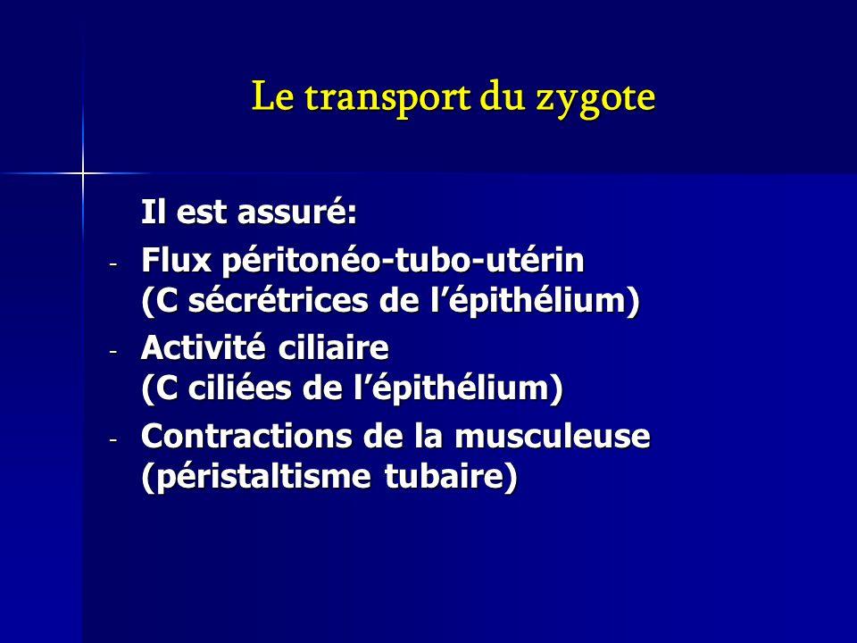 Le transport du zygote Il est assuré: