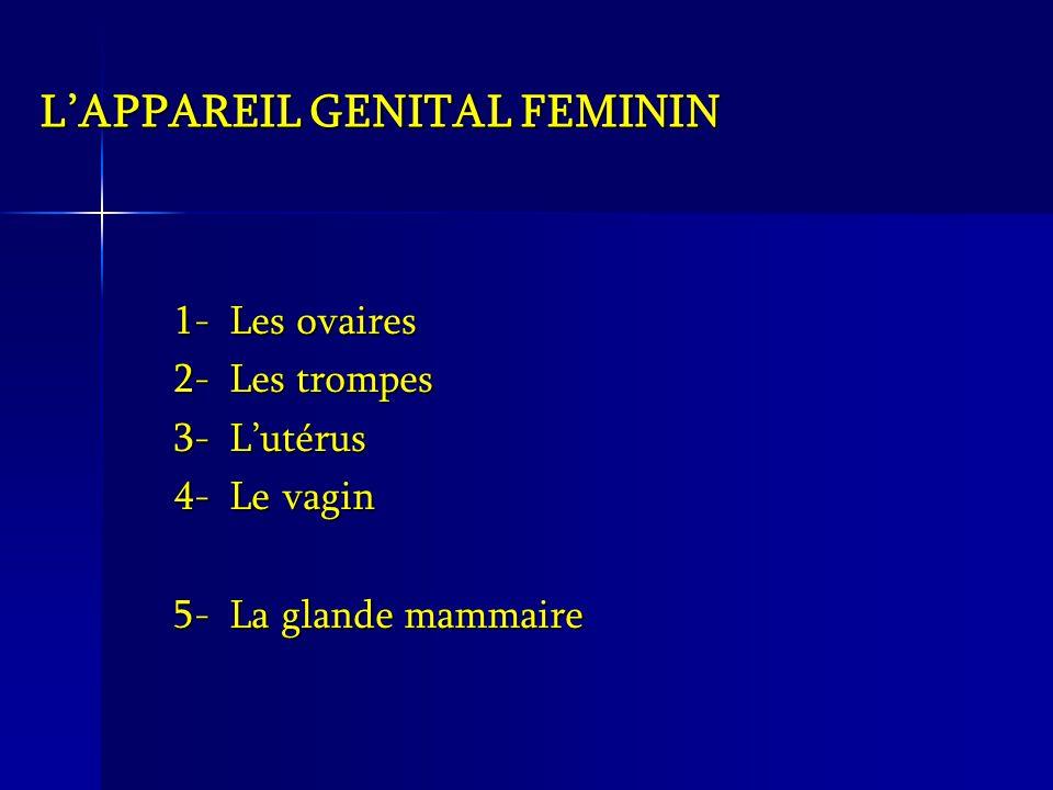 L'APPAREIL GENITAL FEMININ