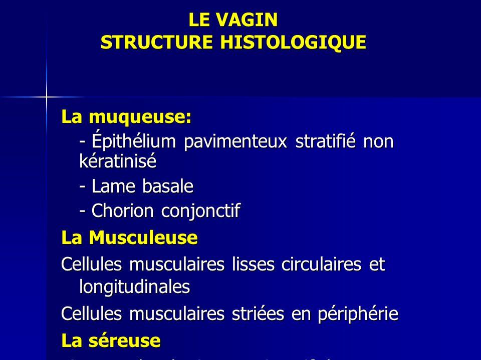 LE VAGIN STRUCTURE HISTOLOGIQUE