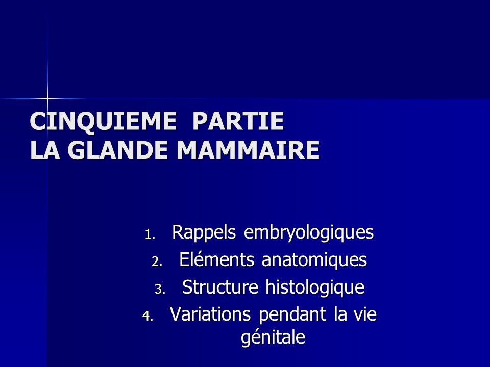 CINQUIEME PARTIE LA GLANDE MAMMAIRE