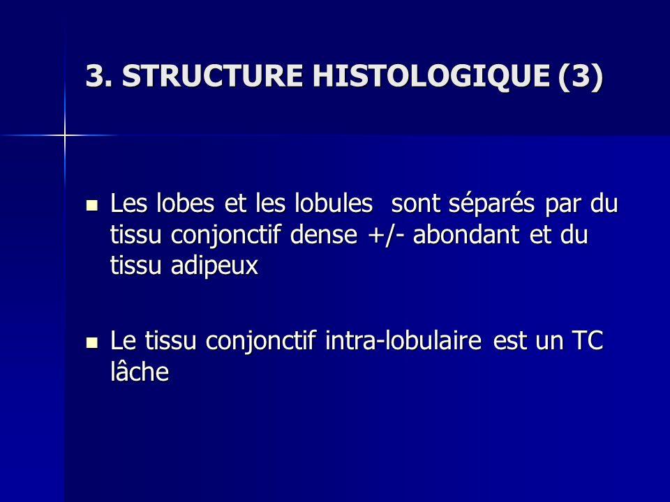 3. STRUCTURE HISTOLOGIQUE (3)